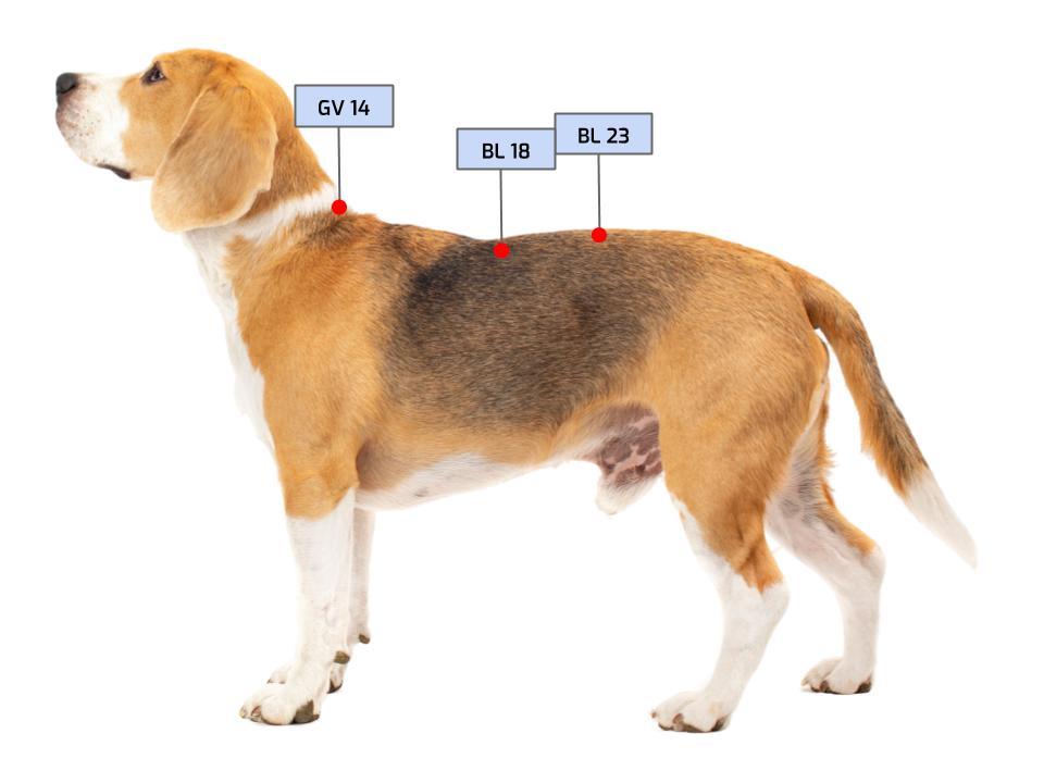 acupressure points dog