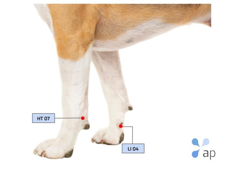 acupuncture points dog
