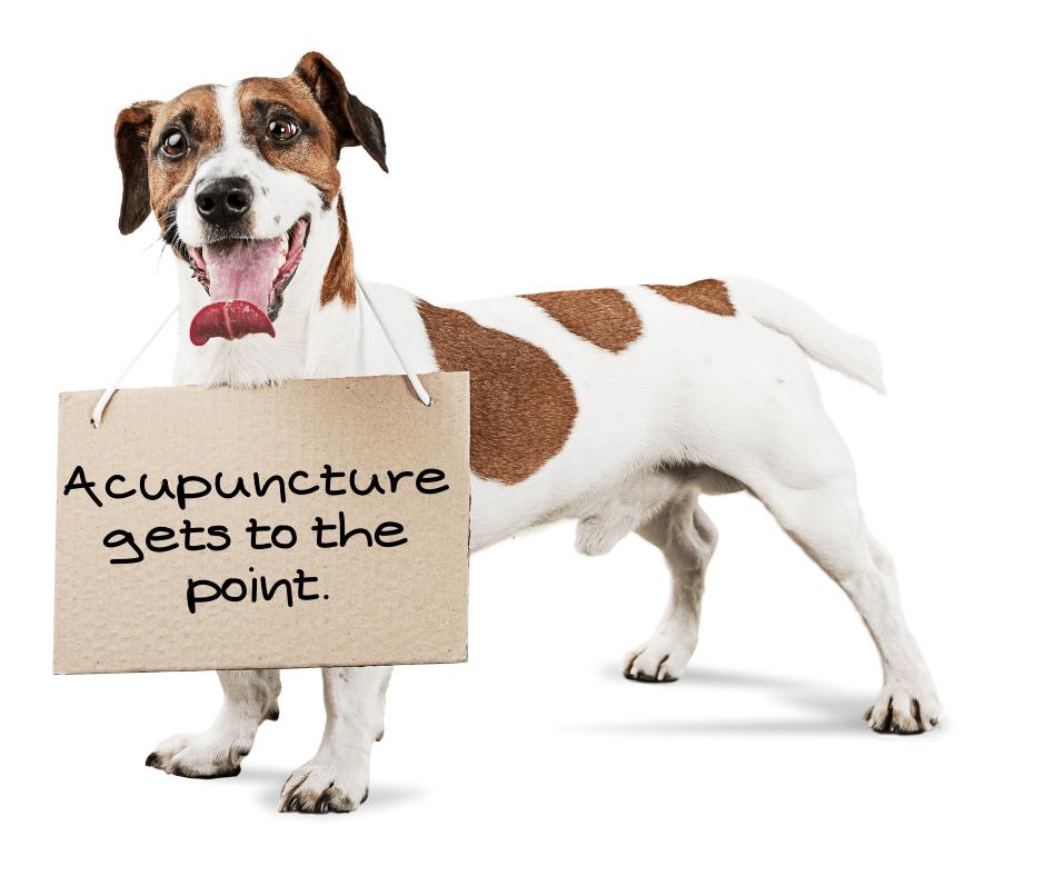 acupuncture dog