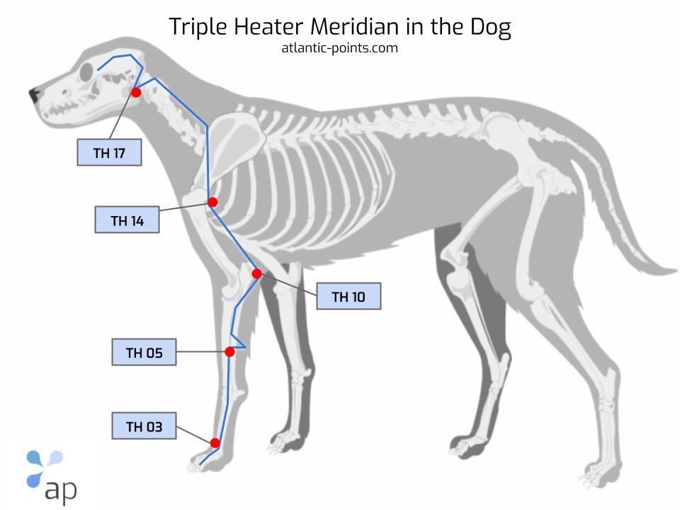 triple heater meridian dog